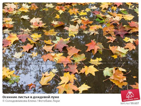 Купить «Осенние листья в дождевой луже», фото № 99607, снято 8 октября 2006 г. (c) Солодовникова Елена / Фотобанк Лори