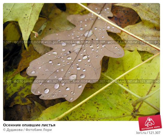 Купить «Осенние опавшие листья», фото № 121307, снято 20 октября 2005 г. (c) Дудакова / Фотобанк Лори
