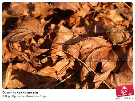 Осенние сухие листья, фото № 97919, снято 30 сентября 2007 г. (c) Вера Фролова / Фотобанк Лори