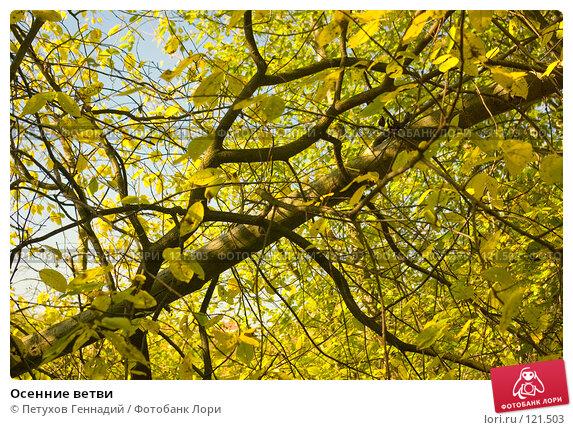 Купить «Осенние ветви», фото № 121503, снято 22 сентября 2007 г. (c) Петухов Геннадий / Фотобанк Лори