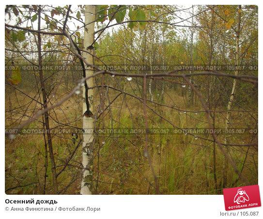 Осенний дождь, фото № 105087, снято 17 августа 2017 г. (c) Анна Финютина / Фотобанк Лори