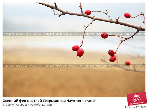 Осенний фон с веткой боярышника Hawthorn branch, фото № 120899, снято 26 ноября 2006 г. (c) Сергей Старуш / Фотобанк Лори