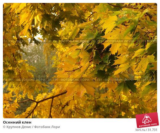 Купить «Осенний клен», фото № 31731, снято 7 октября 2006 г. (c) Крупнов Денис / Фотобанк Лори