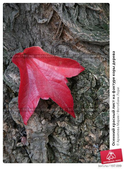 Купить «Осенний красный лист на фактуре коры дерева», фото № 197099, снято 29 сентября 2007 г. (c) Архипова Мария / Фотобанк Лори