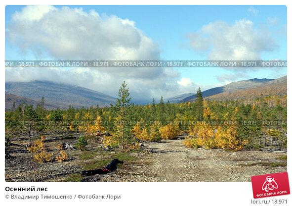 Осенний лес, фото № 18971, снято 14 сентября 2006 г. (c) Владимир Тимошенко / Фотобанк Лори
