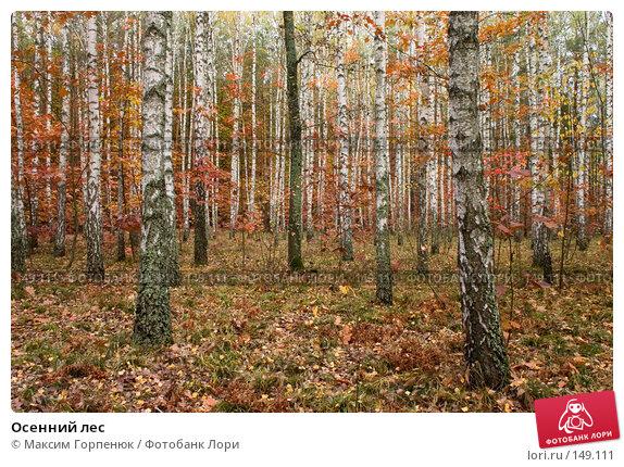 Осенний лес, фото № 149111, снято 20 октября 2005 г. (c) Максим Горпенюк / Фотобанк Лори