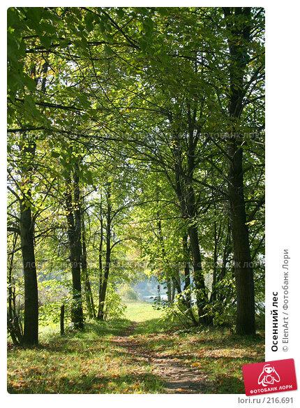 Осенний лес, фото № 216691, снято 30 мая 2017 г. (c) ElenArt / Фотобанк Лори