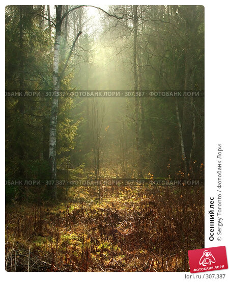 Осенний лес, фото № 307387, снято 27 октября 2007 г. (c) Sergey Toronto / Фотобанк Лори