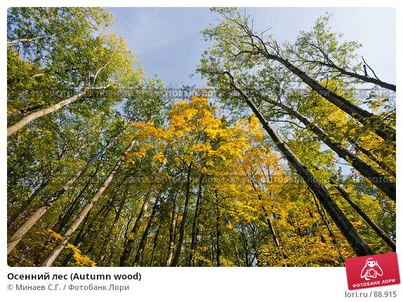 Осенний лес (Autumn wood), фото № 88915, снято 22 сентября 2007 г. (c) Минаев С.Г. / Фотобанк Лори