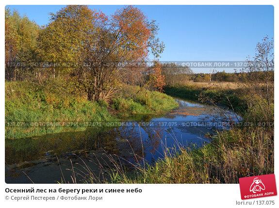 Купить «Осенний лес на берегу реки и синее небо», фото № 137075, снято 22 сентября 2007 г. (c) Сергей Пестерев / Фотобанк Лори