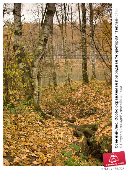 """Осенний лес. Особо охраняемая природная территория """"Теплый стан"""", фото № 156723, снято 26 октября 2007 г. (c) Петухов Геннадий / Фотобанк Лори"""