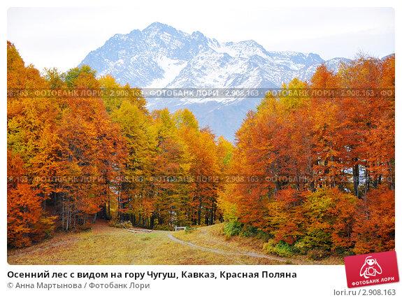 Осенний лес с видом на гору Чугуш, Кавказ, Красная Поляна, фото № 2908163, снято 9 октября 2011 г. (c) Анна Мартынова / Фотобанк Лори