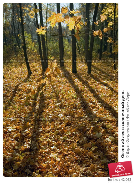 Осенний лес в солнечный день, фото № 42063, снято 11 октября 2005 г. (c) Дарья Олеринская / Фотобанк Лори
