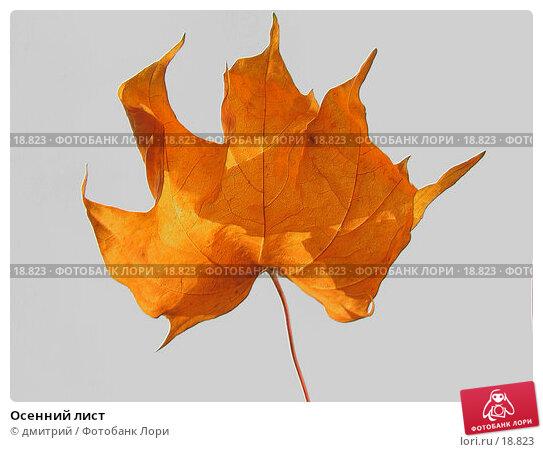 Осенний лист, фото № 18823, снято 6 октября 2004 г. (c) дмитрий / Фотобанк Лори