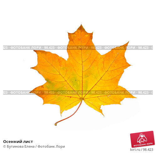 Осенний лист, фото № 98423, снято 8 октября 2007 г. (c) Бутинова Елена / Фотобанк Лори