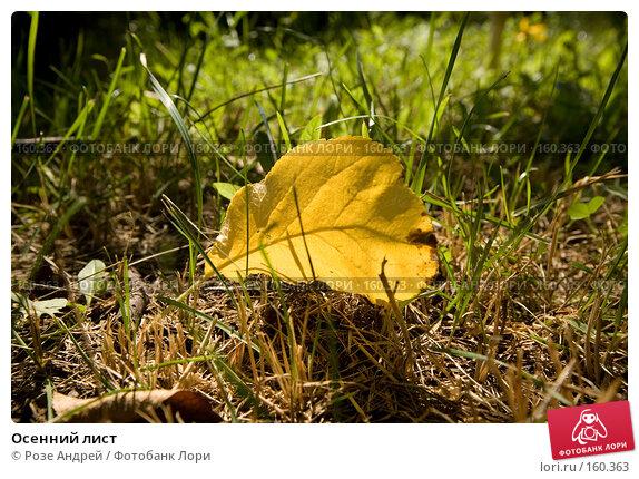 Осенний лист, фото № 160363, снято 27 июля 2007 г. (c) Розе Андрей / Фотобанк Лори