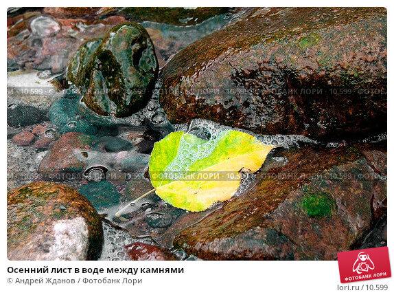 Осенний лист в воде между камнями, фото № 10599, снято 26 марта 2017 г. (c) Андрей Жданов / Фотобанк Лори