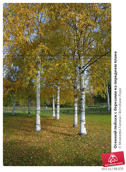 Купить «Осенний пейзаж с березами на переднем плане», фото № 98075, снято 30 сентября 2007 г. (c) Моисеева Галина / Фотобанк Лори