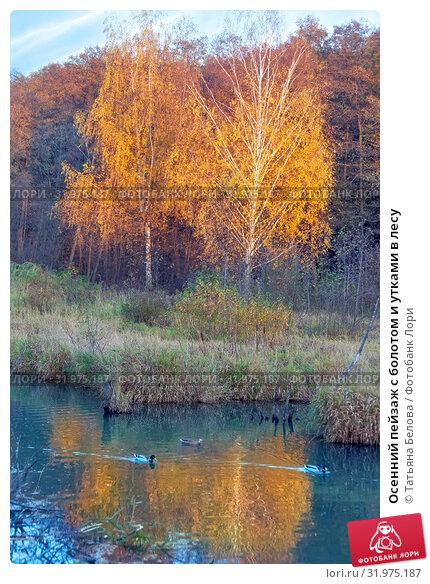 Купить «Осенний пейзаж с болотом и утками в лесу», фото № 31975187, снято 17 октября 2018 г. (c) Татьяна Белова / Фотобанк Лори