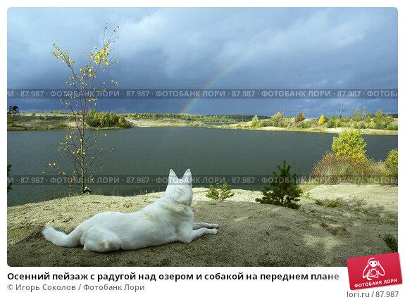 Осенний пейзаж с радугой над озером и собакой на переднем плане, фото № 87987, снято 22 октября 2016 г. (c) Игорь Соколов / Фотобанк Лори