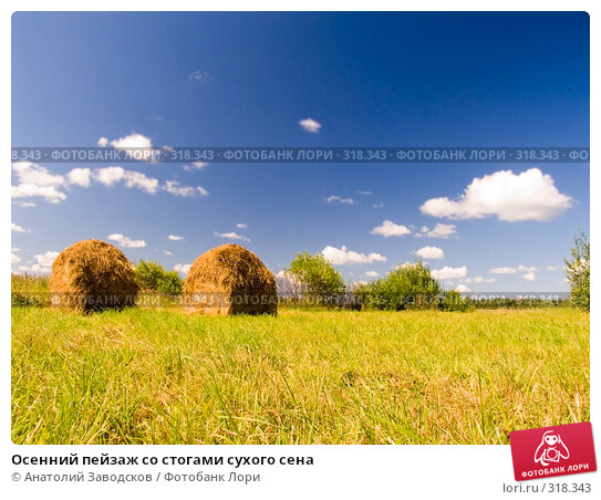 Купить «Осенний пейзаж со стогами сухого сена», фото № 318343, снято 6 августа 2006 г. (c) Анатолий Заводсков / Фотобанк Лори