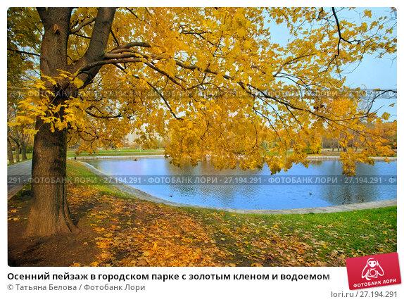 Купить «Осенний пейзаж в городском парке с золотым кленом и водоемом», фото № 27194291, снято 17 октября 2017 г. (c) Татьяна Белова / Фотобанк Лори