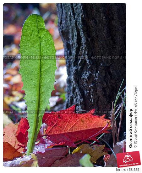 Осенний семафор, фото № 58535, снято 16 октября 2004 г. (c) Юрий Синицын / Фотобанк Лори