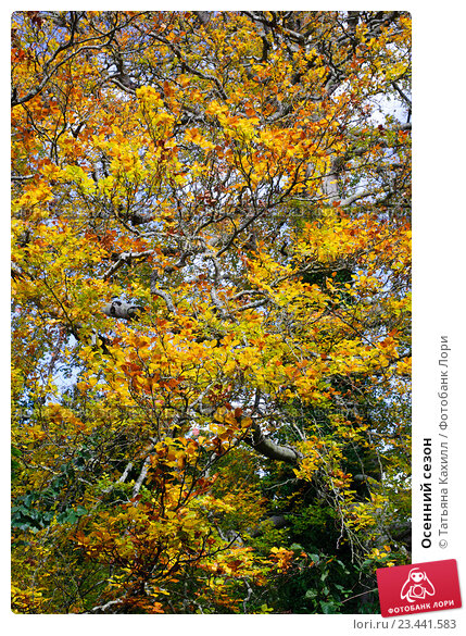 Купить «Осенний сезон», фото № 23441583, снято 22 октября 2015 г. (c) Татьяна Кахилл / Фотобанк Лори