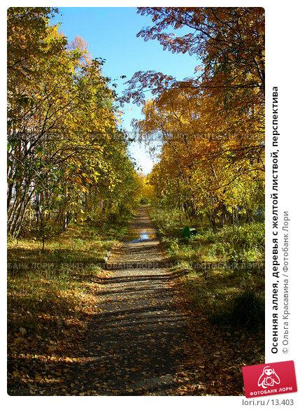 Купить «Осенняя аллея, деревья с желтой листвой, перспектива», фото № 13403, снято 21 сентября 2006 г. (c) Ольга Красавина / Фотобанк Лори