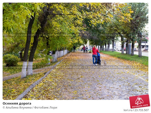 Осенняя дорога. Стоковое фото, фотограф Альбина Ялунина / Фотобанк Лори