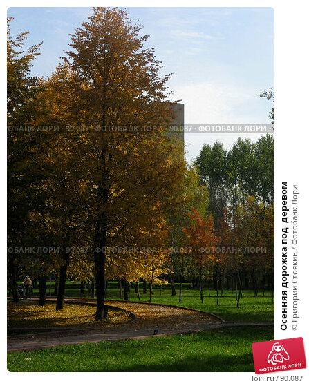 Осенняя дорожка под  деревом, фото № 90087, снято 29 сентября 2007 г. (c) Григорий Стоякин / Фотобанк Лори