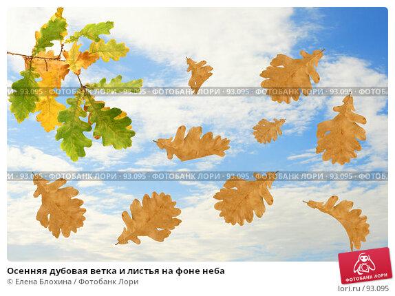 Купить «Осенняя дубовая ветка и листья на фоне неба», фото № 93095, снято 22 сентября 2007 г. (c) Елена Блохина / Фотобанк Лори