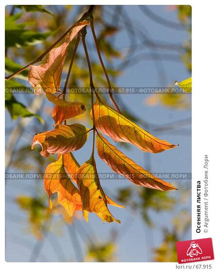 Осенняя листва, фото № 67915, снято 7 сентября 2006 г. (c) Argument / Фотобанк Лори