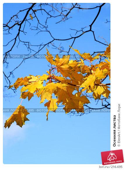 Осенняя листва, фото № 216695, снято 26 июля 2017 г. (c) ElenArt / Фотобанк Лори