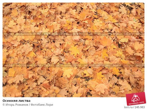 Осенняя листва, фото № 245983, снято 20 октября 2007 г. (c) Игорь Романов / Фотобанк Лори