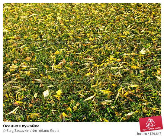 Осенняя лужайка, фото № 129647, снято 7 октября 2004 г. (c) Serg Zastavkin / Фотобанк Лори