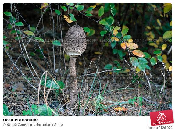 Осенняя поганка, фото № 126079, снято 22 сентября 2007 г. (c) Юрий Синицын / Фотобанк Лори