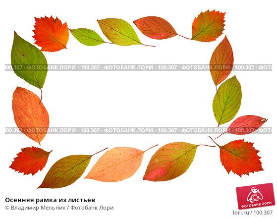 Осенняя рамка из листьев, фото № 100307, снято 4 октября 2007 г. (c) Владимир Мельник / Фотобанк Лори