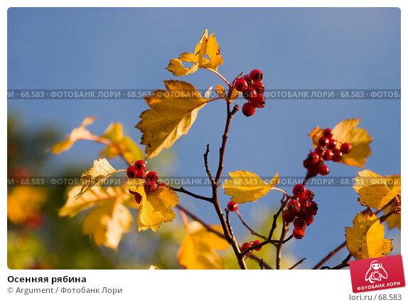 Купить «Осенняя рябина», фото № 68583, снято 6 октября 2006 г. (c) Argument / Фотобанк Лори