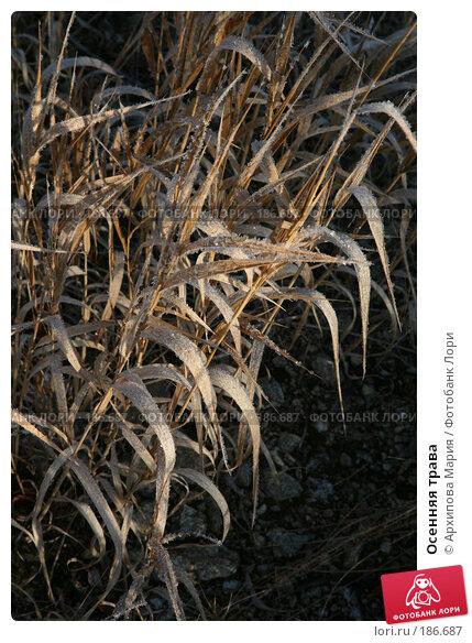 Осенняя трава, фото № 186687, снято 10 ноября 2007 г. (c) Архипова Мария / Фотобанк Лори
