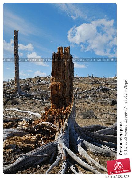 Останки дерева, фото № 328803, снято 15 июня 2008 г. (c) Валерий Александрович / Фотобанк Лори