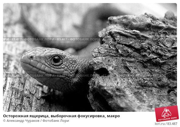 Осторожная ящерица, выборочная фокусировка, макро, фото № 83487, снято 16 августа 2005 г. (c) Александр Чураков / Фотобанк Лори
