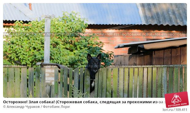 Осторожно! Злая собака! (Сторожевая собака, следящая за прохожими из-за забора на фоне домовладения), фото № 109411, снято 24 августа 2006 г. (c) Александр Чураков / Фотобанк Лори