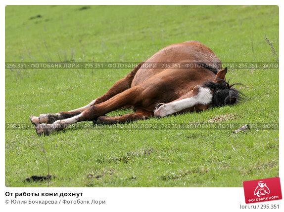 От работы кони дохнут, фото № 295351, снято 5 мая 2005 г. (c) Юлия Бочкарева / Фотобанк Лори
