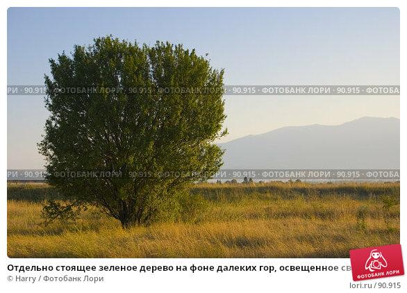 Отдельно стоящее зеленое дерево на фоне далеких гор, освещенное светом заходящего солнца, фото № 90915, снято 17 августа 2007 г. (c) Harry / Фотобанк Лори