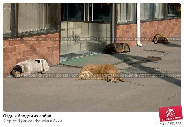 Отдых бродячих собак, фото № 233523, снято 26 марта 2008 г. (c) Артем Ефимов / Фотобанк Лори