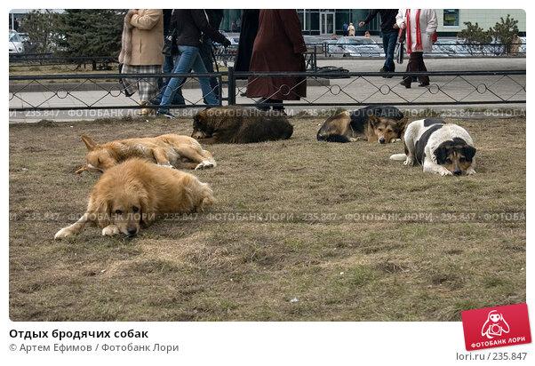 Отдых бродячих собак, фото № 235847, снято 28 марта 2008 г. (c) Артем Ефимов / Фотобанк Лори