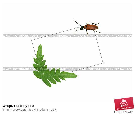 Открытка с жуком, фото № 27447, снято 25 июля 2017 г. (c) Ирина Солошенко / Фотобанк Лори