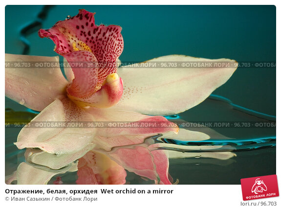 Отражение, белая, орхидея  Wet orchid on a mirror, фото № 96703, снято 4 декабря 2003 г. (c) Иван Сазыкин / Фотобанк Лори