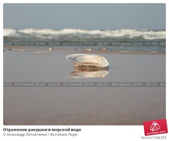 Купить «Отражение ракушки в морской воде», фото № 124315, снято 5 сентября 2007 г. (c) Александр Литовченко / Фотобанк Лори